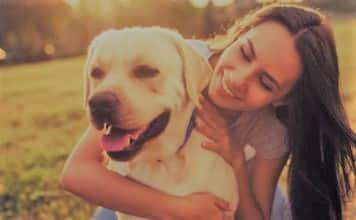 Labrador Retriever happy with girl