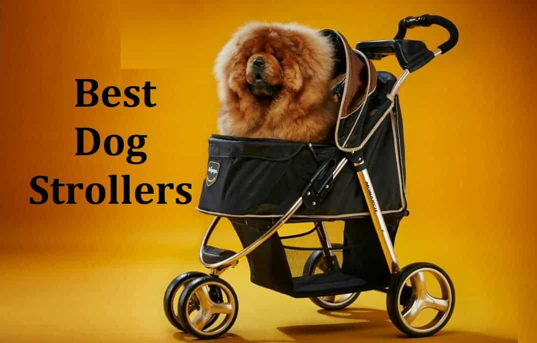 A dog sitting in dog stroller
