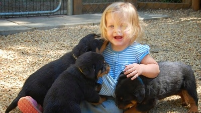 Rottweiler Puppy Playing with Babie