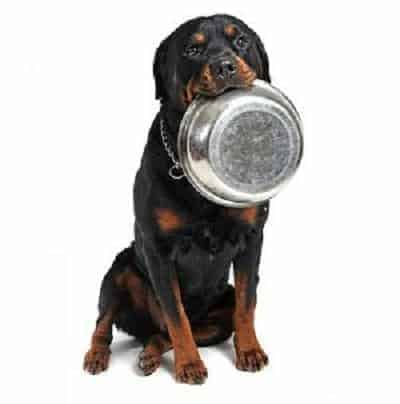 rottweiler puppy dog food