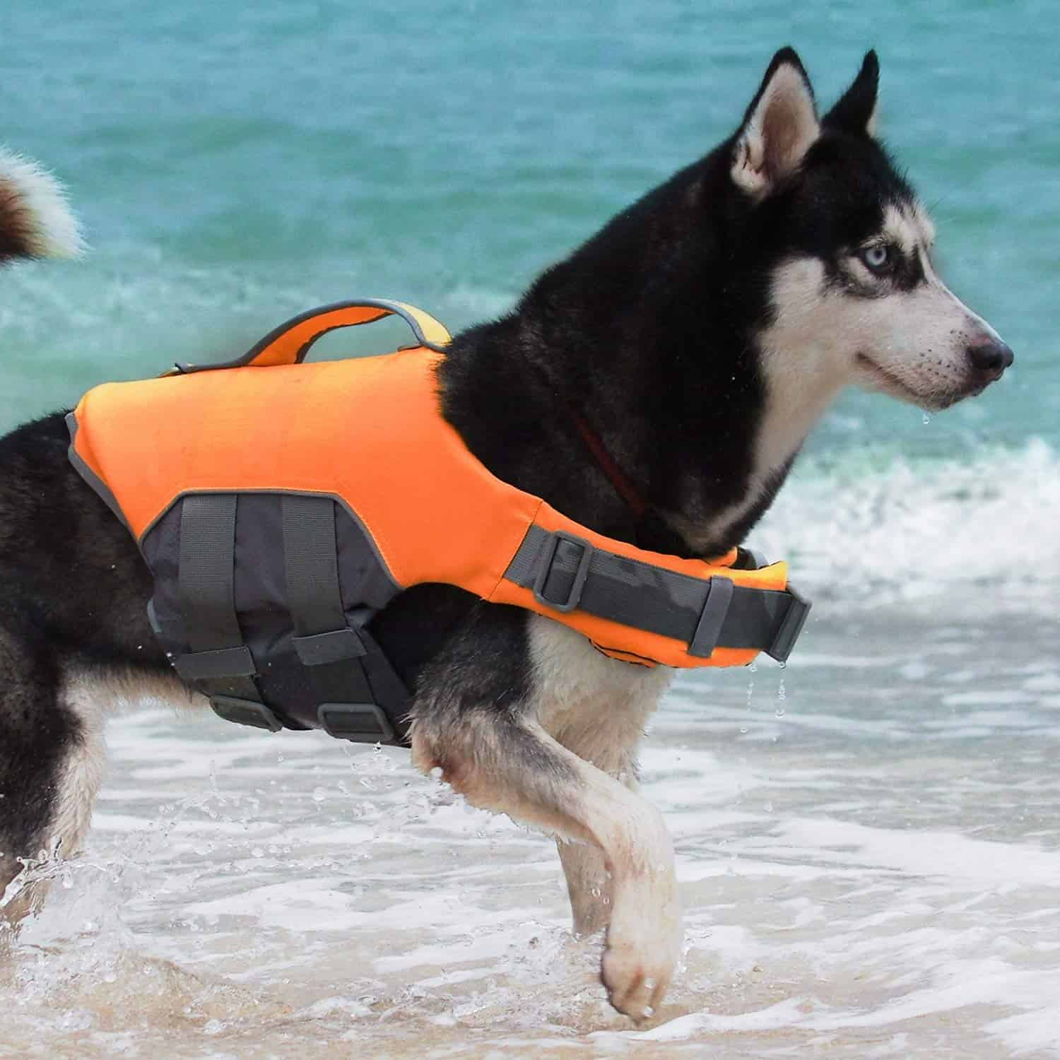 Dog Life With Jacket