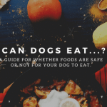 Can dogs eat...