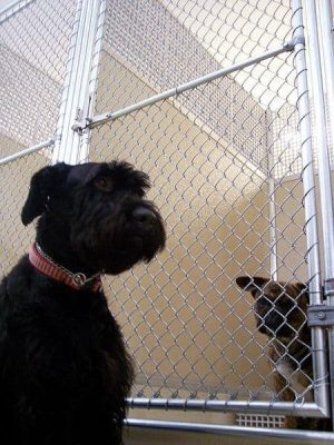 Kennel Cough