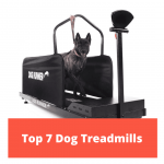 Top 7 Dog Treadmills