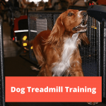 Dog Treadmill Training