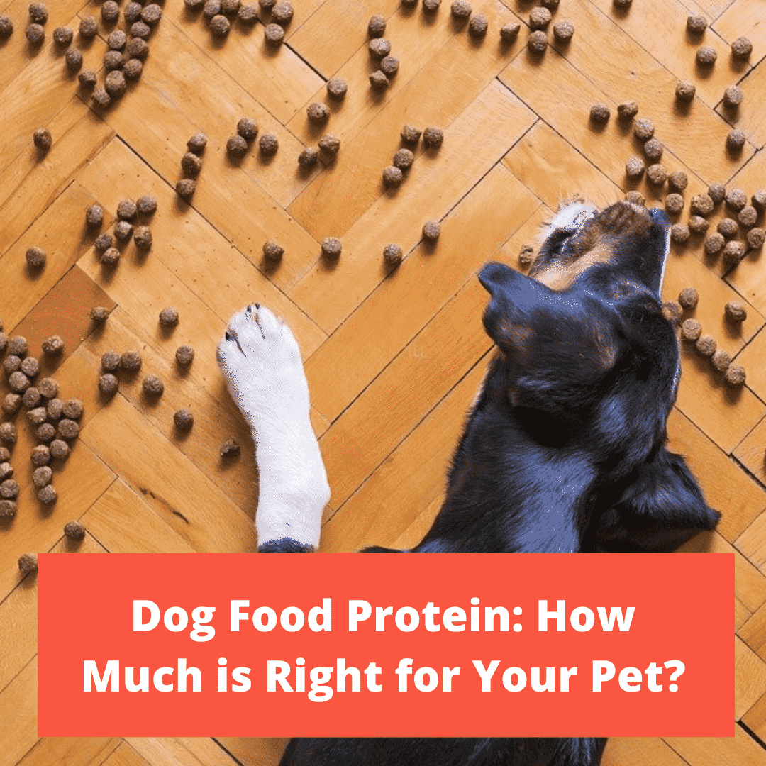 Dog Food Protein: How Much is Right for Your Pet?
