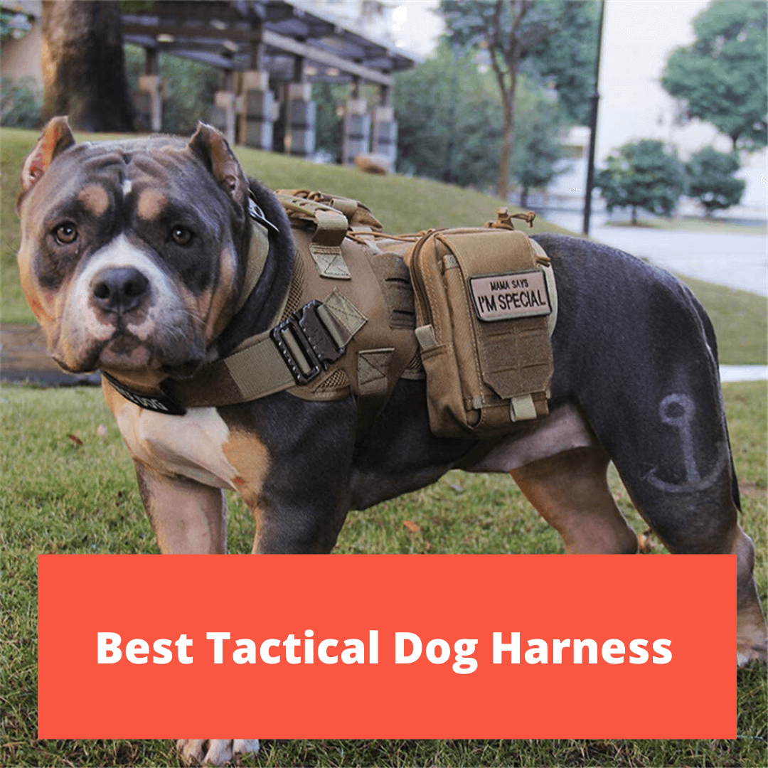 Best Tactical Dog Harnesses 2020