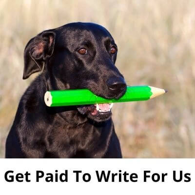 Get Paid To Write For Us