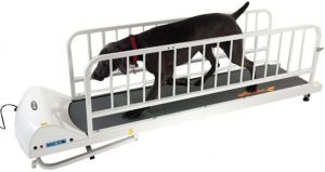 GoPet Treadmill for Large Dogs